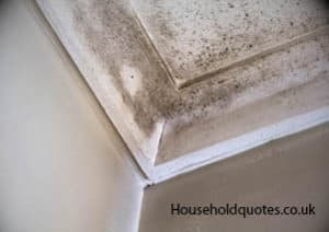 mould on the roof
