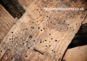 wood damaged by woodworms